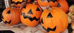 Calabazas preparadas para la fiesta de Halloween.